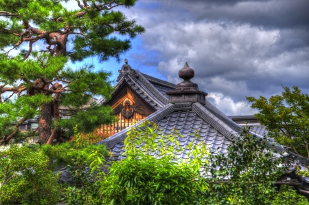 hostas: The tile store root:Giboshi