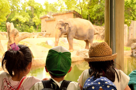 land mammals: Children who see the Zoos elephants