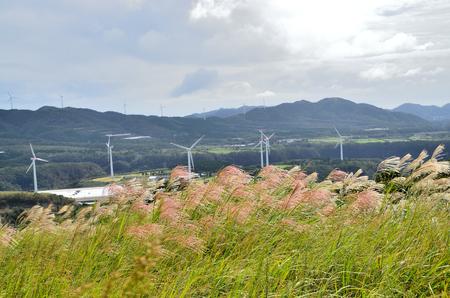 sata: Prairie and the wind