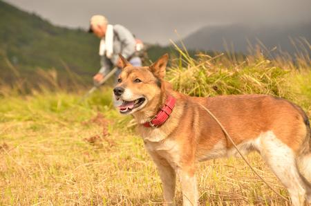 犬 (ハイブリッド)