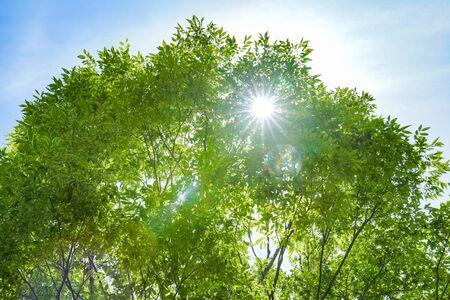 It's full of greenery. Stok Fotoğraf