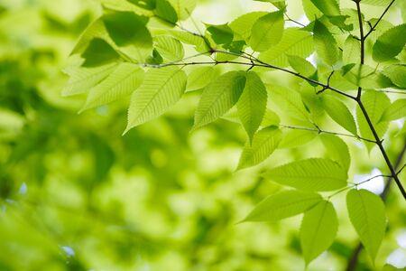 Kijk omhoog naar het groen