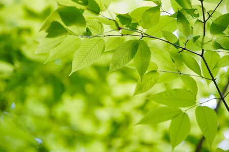 Regarde le vert