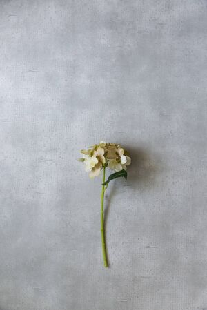 Concrete and Flowers