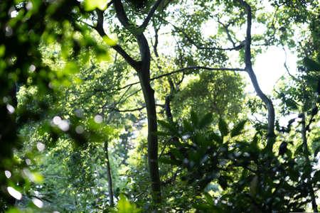A snapshot of the bright forest on a sunny day Reklamní fotografie