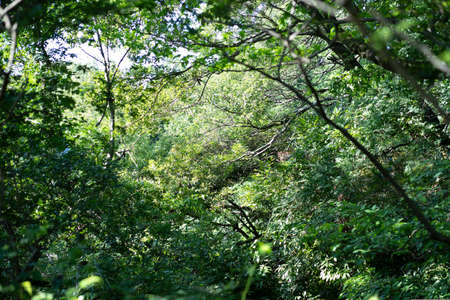 A snapshot of the bright forest on a sunny day