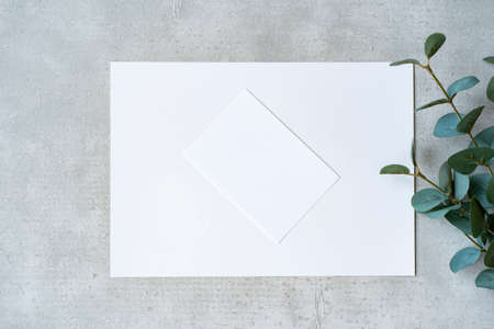 White paper and plants placed on a concrete plane