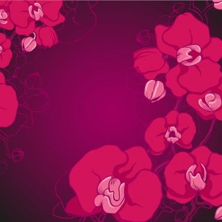 violet orchid Illustration