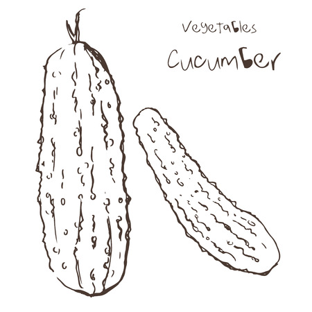 Sketch of cucumber by hand