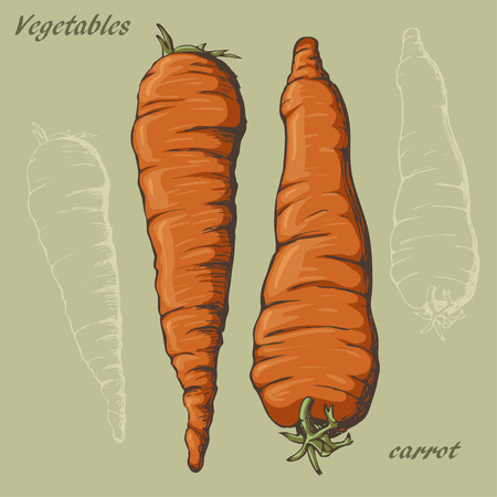 Sketch of carrot  by hand