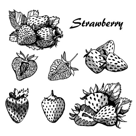 strawberry, Vector hand drawing Illustration