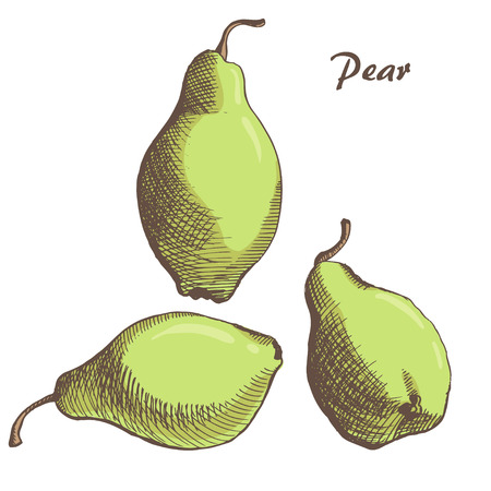 vector hand drown pear