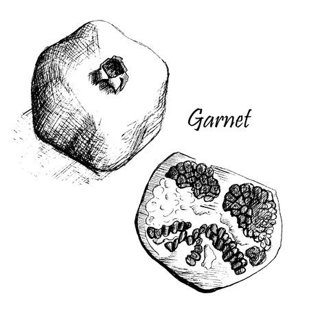 drown: vector hand drown garnet Illustration