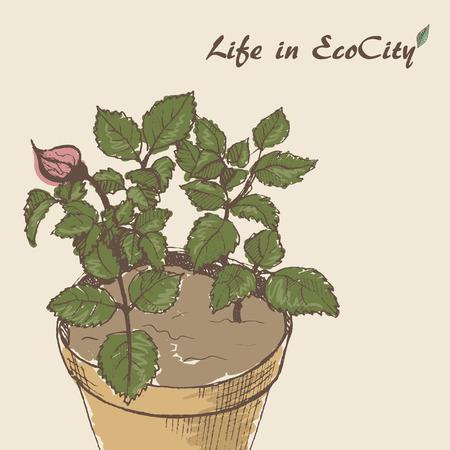 pot plant: The sketch of pot plant