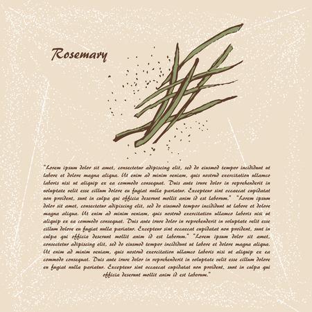 rosemary: Vector sketch of rosemary