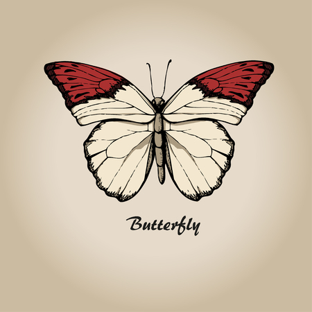 Butterfly vtctor. Insect sketch collection for design Illustration