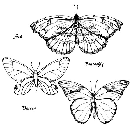 entomology: Butterfly set. Insect sketch collection for design