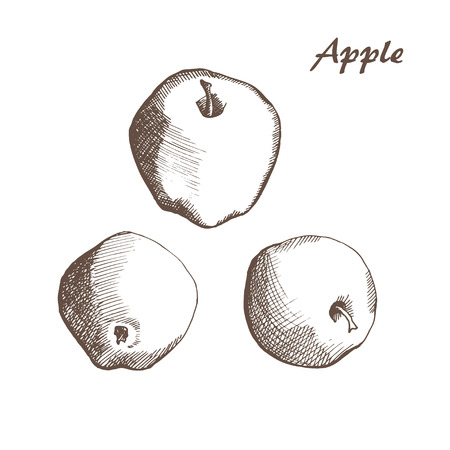 drown: vector hand drown apple Illustration