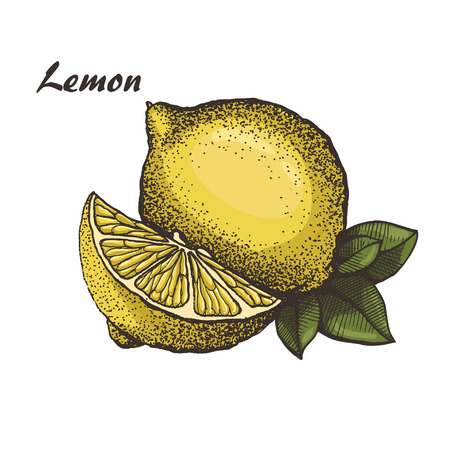 Lemon, hand drawn lemon with leaves Illustration