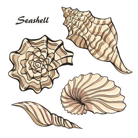 hand-drawn vector sketch of seashell set, color