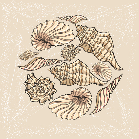 hand-drawn vector sketch of seashell. background for design
