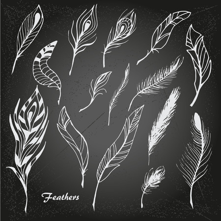 The sketch of feathers. Hand drawn vector  for design set on chalk-board