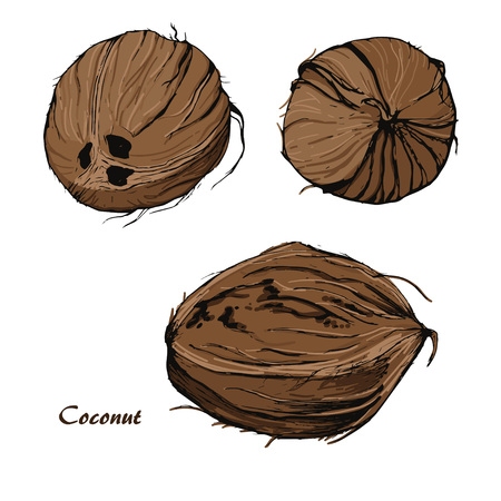Coconut sketch in retro stile on izolated background.