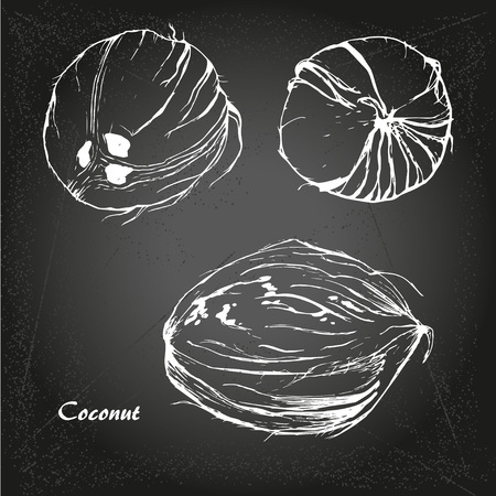 Coconut sketch in retro stile chalk board background.