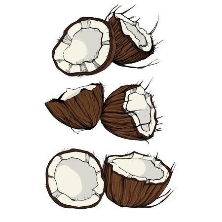 stile: Coconut sketch in retro stile on isolated background. Illustration