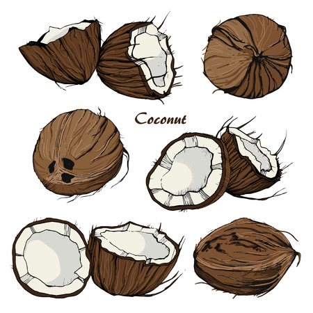 Coconut sketch in retro stile on isolated background. Illustration