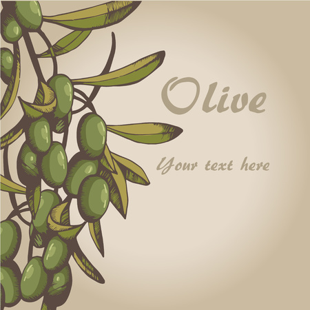 Vector sketch of olive tree branch. for design