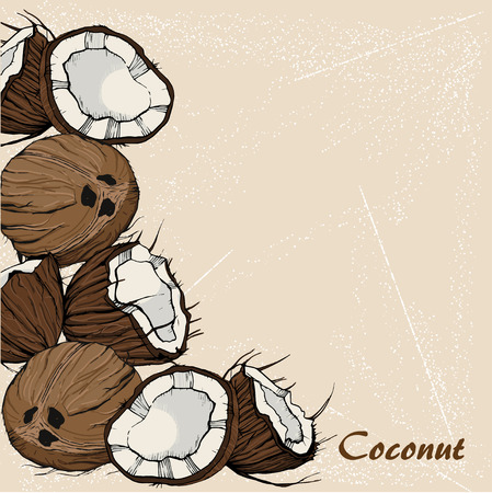 Coconut sketch in retro stile on vintage background. For design