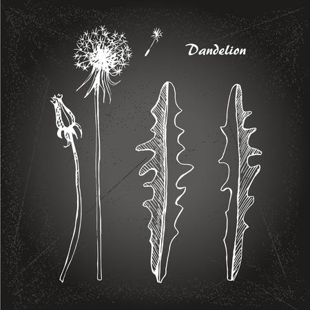 decode: Vector sketch illustration dandelions on chalk-board background.