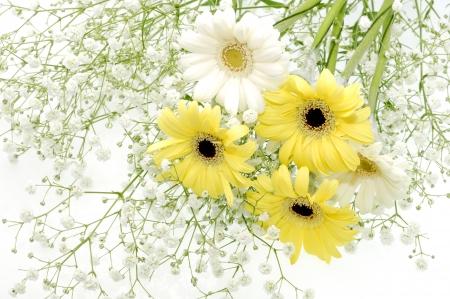barberton daisy:  Bouquet of the Barberton daisy Stock Photo