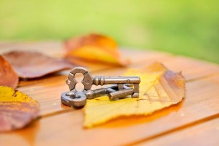garden key: Puzzle ring