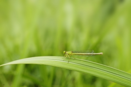 feeble: Dragonfly
