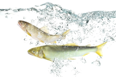 Fish in the water(Ayu) Stock Photo - 16185307