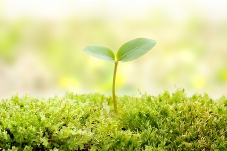 seedling growing: Green seedling of new life concept Stock Photo