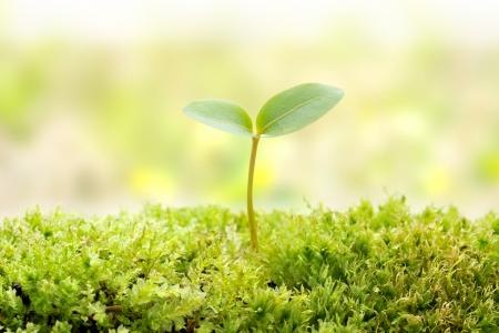 semilla: Pl�ntula verde del concepto de vida nueva