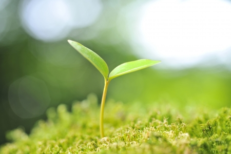 Green seedling of new life concept Banque d'images