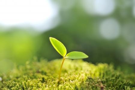 新しい生活のコンセプトの緑の苗