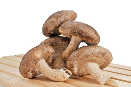 A selection of Shitake on white background Standard-Bild