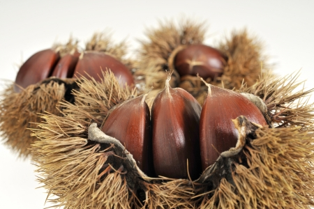 marron: Chestnut