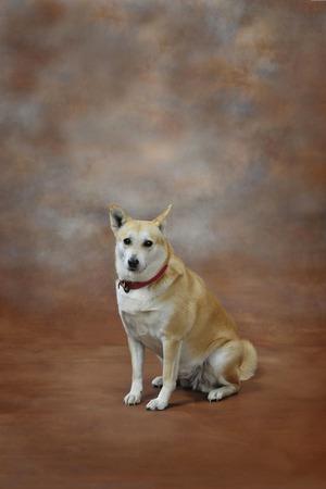 犬の肖像画 写真素材 - 27560500