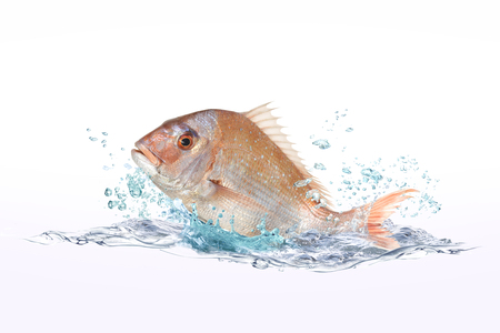 fish water: red snapper fish