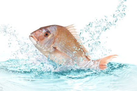 poisson vivaneau rouge