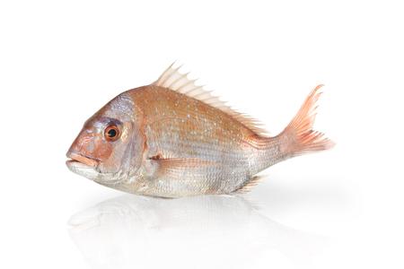 Pescado pargo rojo Foto de archivo - 58445203