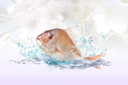 Pescado pargo rojo Foto de archivo - 58445238