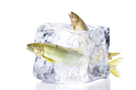 icecube: freshwater trout