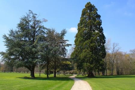 diversity domain: Garden of the Cheverny Castle Stock Photo